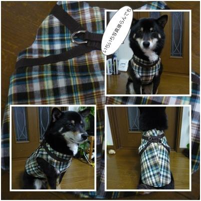 harufuku_20110412111248.jpg