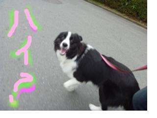 snap_jyunlaugh_201125195228.jpg