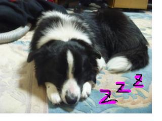 snap_jyunlaugh_201125195658.jpg