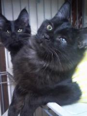ひーちゃん&みーくん 猫 5ヶ月