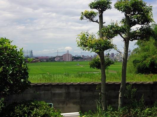 庭から20120805