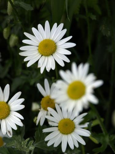 そのへんの花
