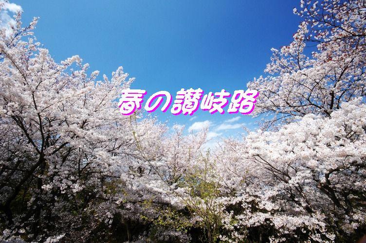 桜好日 054