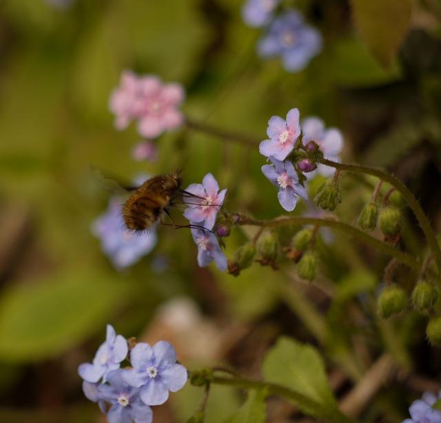 昆虫~蜜美味しい
