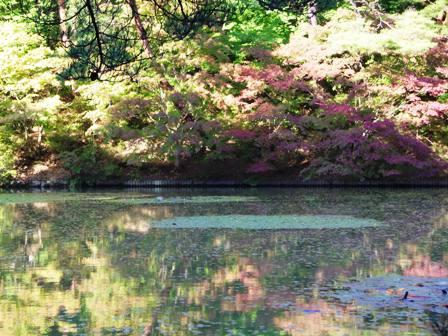色づき始めた紅葉の池。
