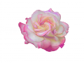 薔薇2 094のコピー2