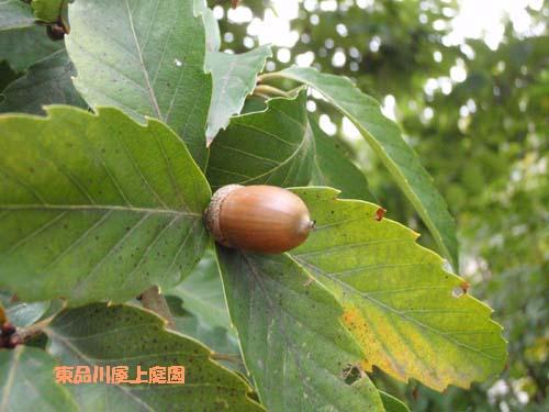 秋 むっつ (6っつ)  №831