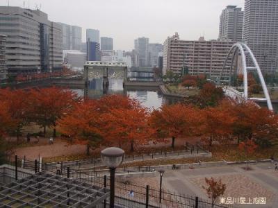 kouyou1_20101114160125.jpg