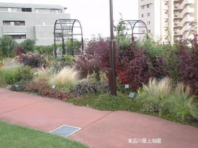 shisoaoi1.jpg