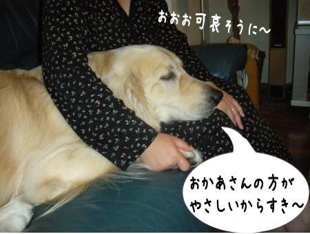 縺励c繧薙・-5_convert_20101003163703