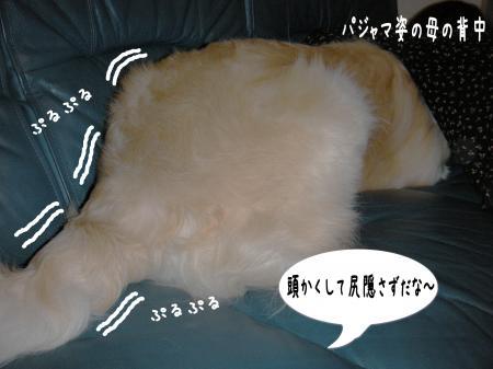 縺励c繧薙・-4_convert_20101003163620
