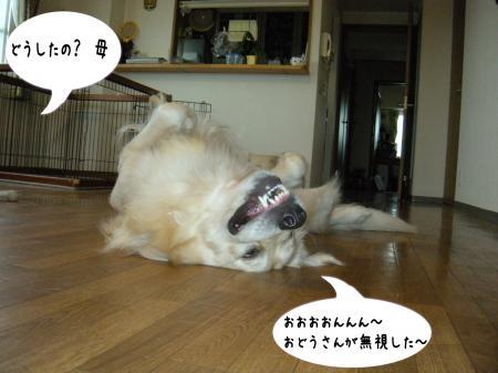縺励c繧薙・-3_convert_20101003163526