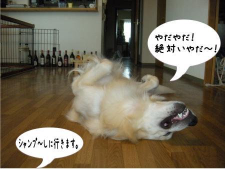 縺励c繧薙・-1_convert_20101003163344