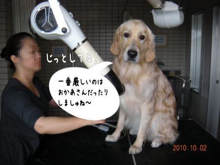 縺励c繧薙・-7_convert_20101003163856