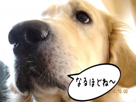 縺オ繧薙□1_convert_20101004131458