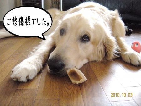 縺オ繧薙□3_convert_20101004133514