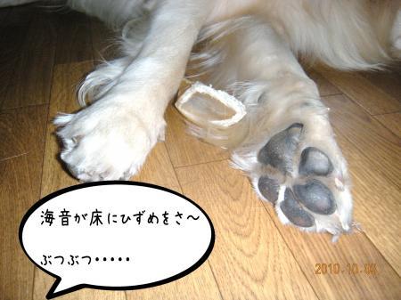 縺オ繧薙□4_convert_20101004134101