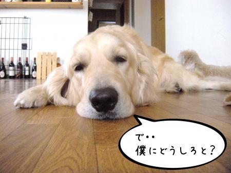 縺オ繧薙□5_convert_20101004134352