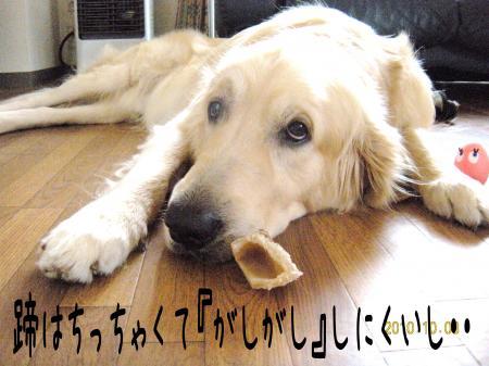 縺翫・縺後>6_convert_20101013102728