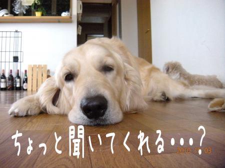 縺翫・縺後>1_convert_20101013102352