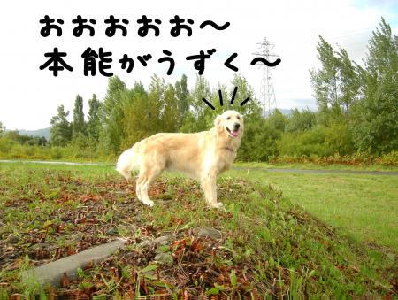 縺阪g縺イ3_convert_20101022114654