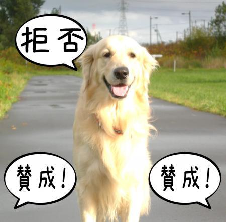 縺阪g縺イ1_convert_20101022114358