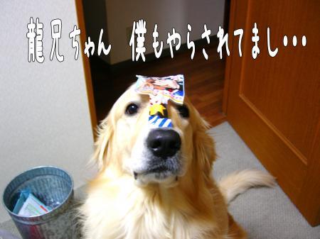 縺コ縺ゥ繧・_convert_20101023104014