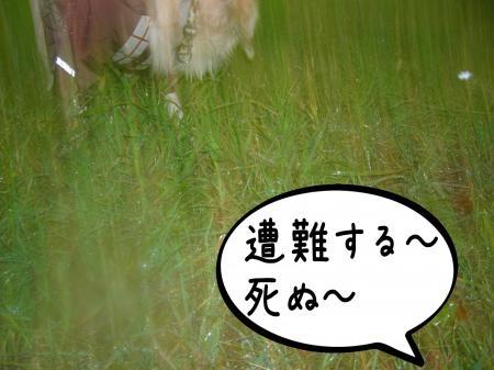 縺ッ縺、繧・″3_convert_20101026170655