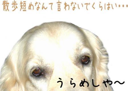縺ッ縺、繧・″2_convert_20101026170604