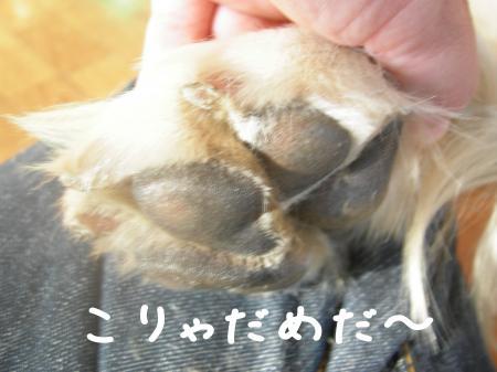 縺カ繧峨▲縺励s縺・_convert_20101031112833