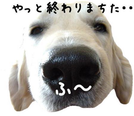 縺カ繧峨▲縺励s縺・_convert_20101031113104