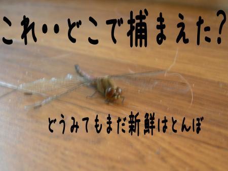 縺ケ縺」縺ゥ7_convert_20101031215816