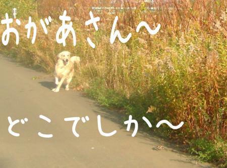 謐懃エ「5_convert_20101102114951