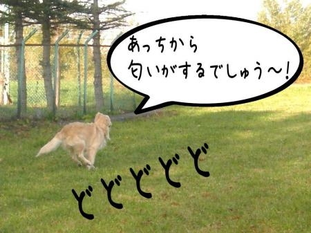 謐懃エ「3_convert_20101102114855