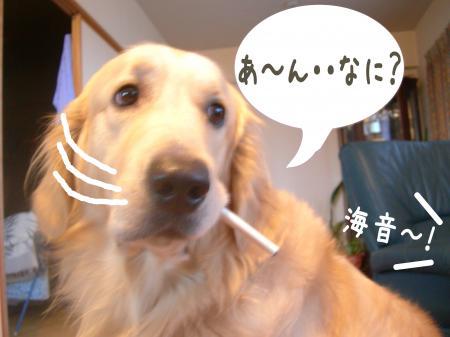 蝟ォ辣・_convert_20101104115509