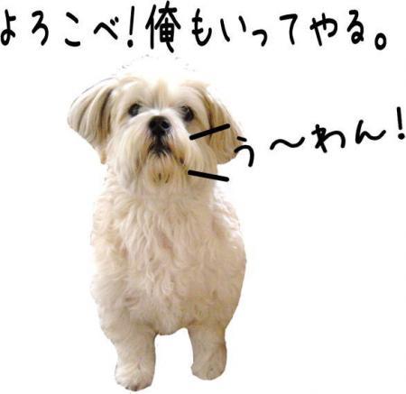 驥悟クー繧・_convert_20101110212722