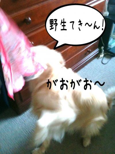 繝斐け繝九ャ繧ッ7_convert_20101116125317