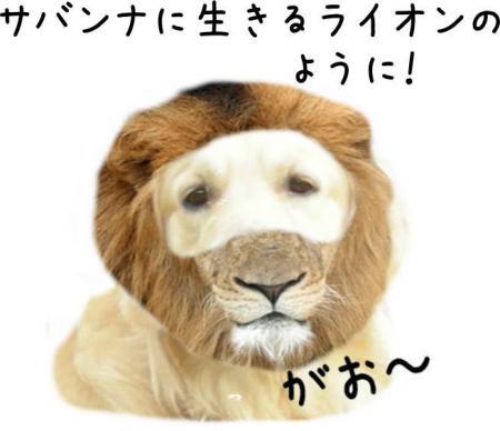 繝斐け繝九ャ繧ッ8_convert_20101116125343