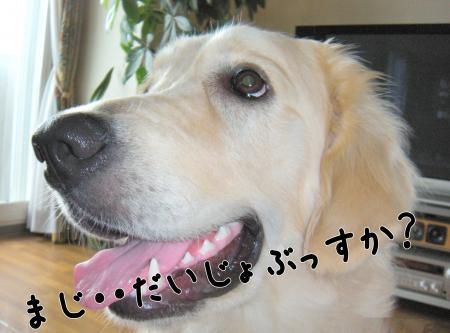螟ァ荳亥、ォ3_convert_20101123215121