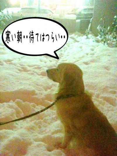 縺セ縺ヲ1_convert_20101203090026