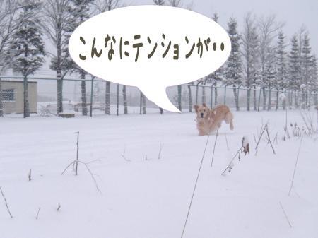 縺倥s縺舌k1_convert_20101220083241