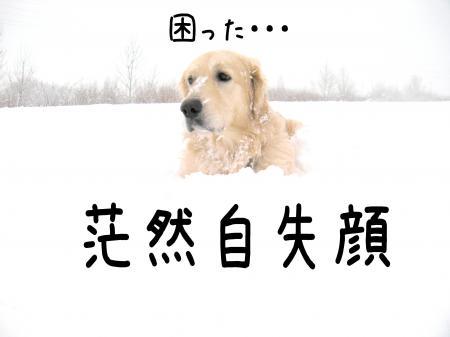 蜷ケ髮ェ6_convert_20110107152514