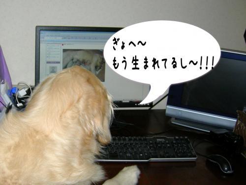 豬キ驥・_convert_20110110222444