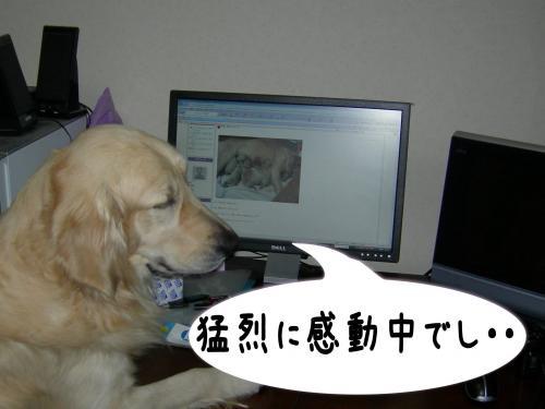 豬キ驥・_convert_20110110222512