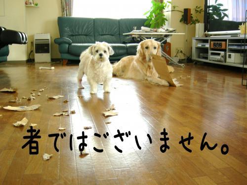 繝?繝ウ繝懶シ阪Ν4_convert_20110126224041