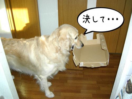 繝?繝ウ繝懶シ阪Ν2_convert_20110126223957