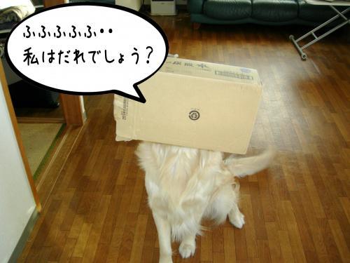 繝?繝ウ繝懶シ阪Ν1_convert_20110126223925