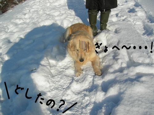縺。縺ゅ″8_convert_20110129125318