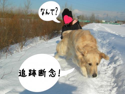 縺。縺ゅ″7_convert_20110129125244