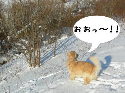 縺。縺ゅ″・狙convert_20110129124906
